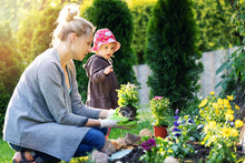 Mother And Daughter Planting Flowers Together In Home Garden Bed