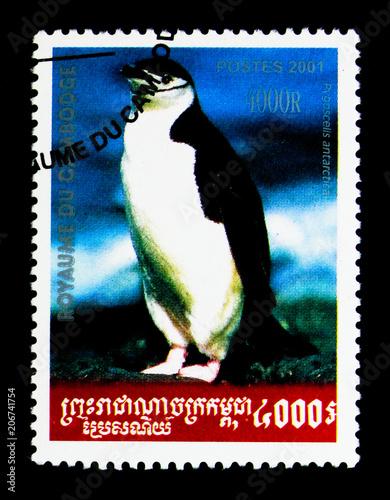Valokuva  Chinstrap Penguin (Pygoscelis antarctica), Pinguin serie, circa 2001