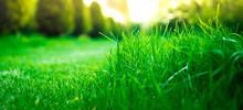 View Of Green Grass, Closeup. ...