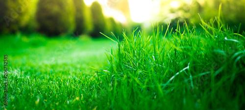 View of green grass, closeup Canvas Print