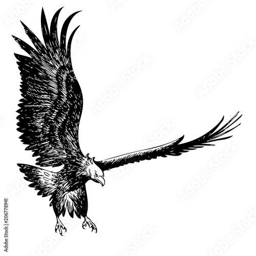 Poster Aigle fighting eagle hand drawn