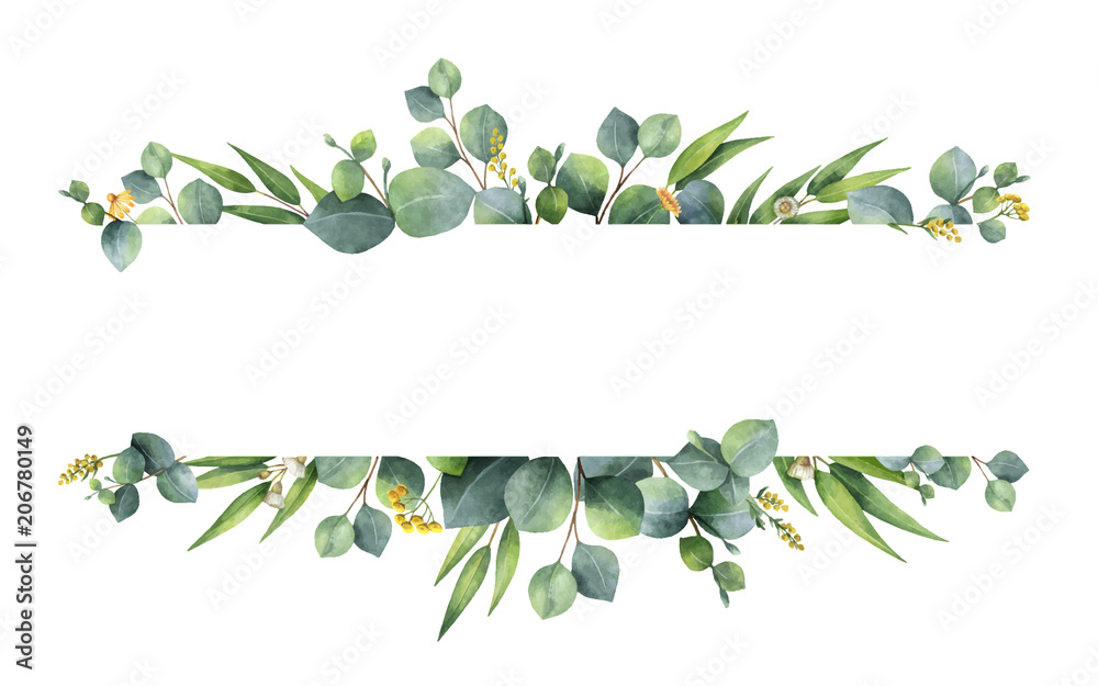 Fototapety, obrazy: Watercolor vector green floral banner with silver dollar eucalyptus leaves and branches isolated on white background.