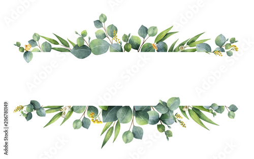 Fototapeta Watercolor vector green floral banner with silver dollar eucalyptus leaves and branches isolated on white background. obraz
