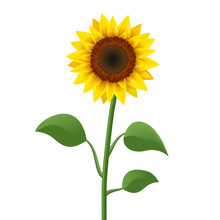 Sunflower Realistic Icon Vector Isolated. Yellow Sunflower Blossom Nature Flower Illustration For Summer