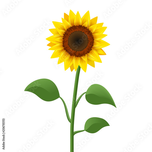 Fotografia Sunflower realistic icon vector isolated