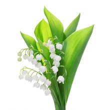 Lily Of The Valley Flower Isol...