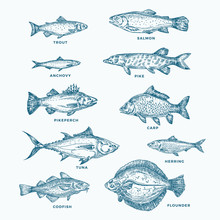 Hand Drawn Ocean Or Sea And River Ten Fishes Set. A Collection Of Salmon And Tuna Or Pike And Anchovy, Herring, Trout, Carp Sketches Silhouettes.