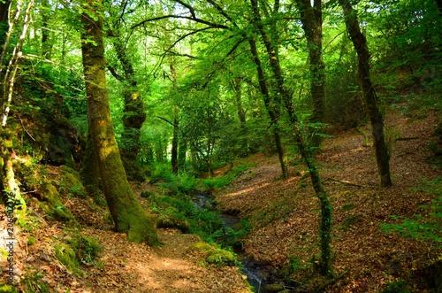 In de dag Weg in bos sous bois
