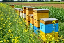 A Row Of Bee Hives In A Field Of Flowers