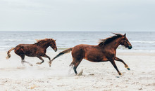 Two Brown Horses Running Fast ...