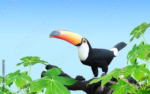 Horizontal banner with beautiful colorful toucan bird