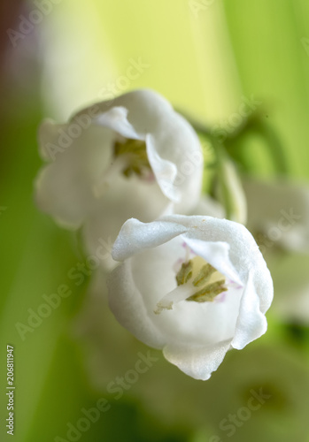 Foto op Plexiglas Lelietje van dalen Buds of a lily of the valley