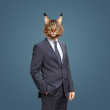 Katze Im Anzug