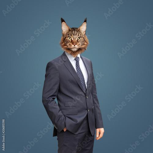 Foto  Katze im Anzug