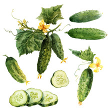 Watercolor Cucumber Vector Set