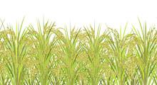 Rice Field. Seamless Horizonta...