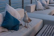 Proud Seagull Walking On Empty Cafe Terrace