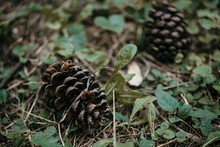 Two Pine Cones Sitting On The Green Grass