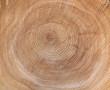 Textur der Jahresringe eines Baumes