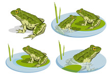 Set Of Different Frogs. Vector...
