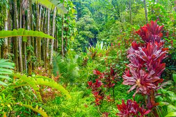 Obraz na Szkle Do sypialni Hawaiian Tropical Paradise