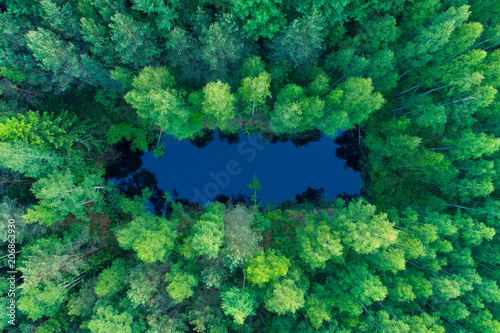 Stickers pour porte Vue aerienne Summer nature. Vivid nature background. Lake in green forest.