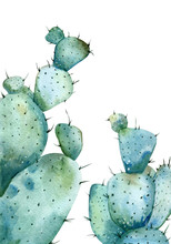 Watercolor Two Big Cactuses With Long Thorns