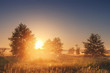 Landscape of bright sunrise over summer misty meadow with trees on clear morning. Natural rural scene of golden field with vivid sun on horizon shining warm sunlight Sun between trees on foggy meadow