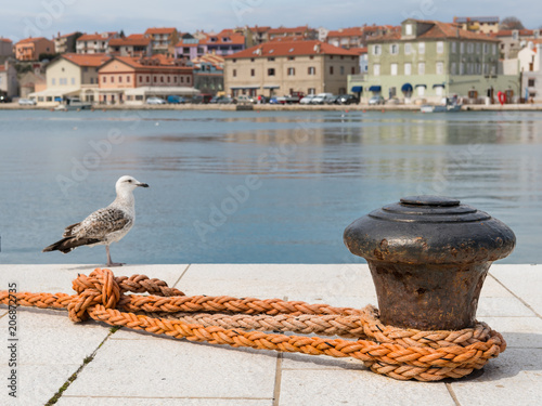 Fotografía  Rusty bollard, orange dew and a youg sea gull in the harbour of Cres