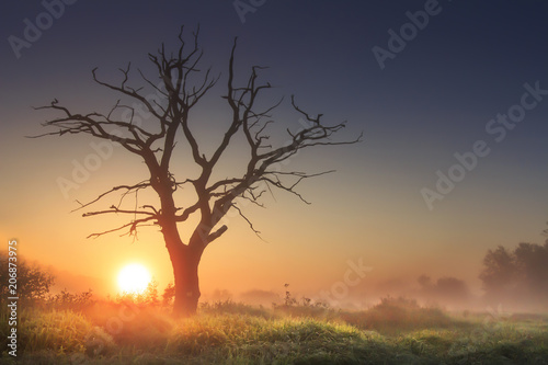 In de dag Ochtendgloren bright morning landscape in savannah with large old dry tree at sunrise against clear blue sky. majestic tree in morning light in tall grass. sun on horizon rises above wild nature in foggy morning.