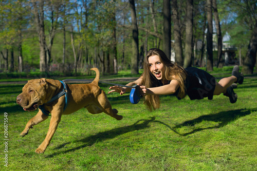 Foto the dog pulls for a girl, a naughty dog girl in flight for a dog