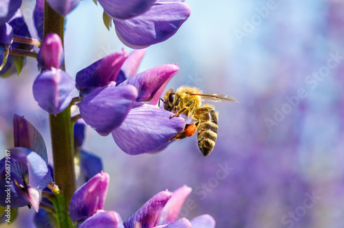 Bee collects nectar on a flower .