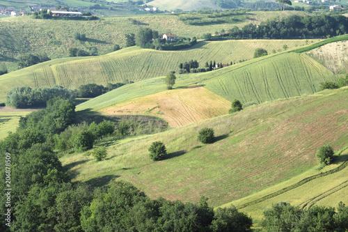 Fotobehang Olijf regione Marche,Italia,collina,campi coltivati,rurale,paesaggio