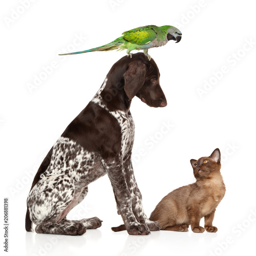 Photo  Group of pets on a white background