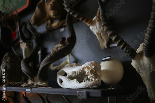 Animal Bones: Dead Animal Horror Oddities Canvas-taulu