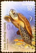 Green Turtle On Australian Postage Stamp