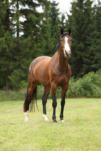 Nice Brown Horse Looking At You