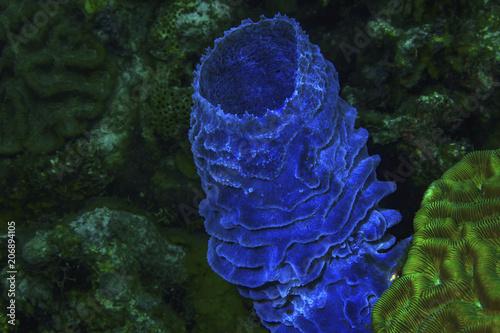 Azure Vase Sponge 2