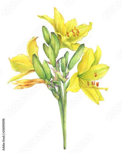 Flowers Similar To Lilies: Bouquet Of Yellow Lilies Flower Hemerocallis