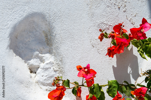 Photo Beautiful red flowers in front of a white stone wall