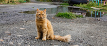 Red Cat On The Street