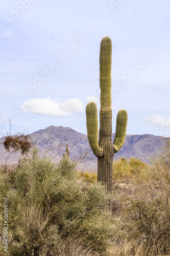 Papiers peints Cactus Saguaro and Mountains - Backed by the mountains to the east of Phoenix, Arizona, a tall saguaro cactus with arms grows in the scenic desert landscape.