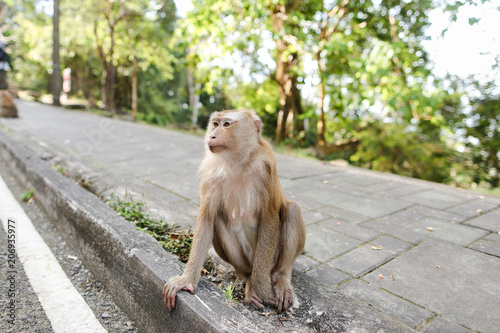 Fotografie, Obraz  Little nice monkey sitting on road in India