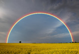 Fototapeta Tęcza - rainbow after a spring storm