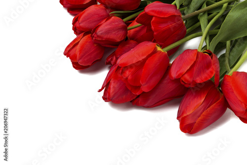 Tuinposter Bloemen Beautiful red tulips on a white background. Top View, Flat lay.