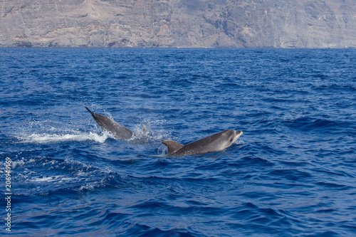 Foto op Aluminium Dolfijn Beautiful dolphin swimming. Dolphin jumping above blue water in the Ocean
