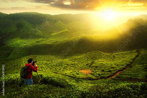 Papiers peints Vignoble A photographer take a photo at green tea farm