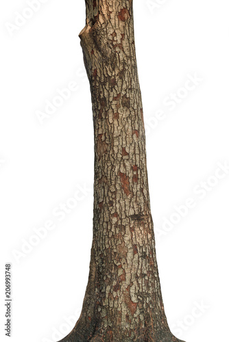 Fototapeta Tree trunk isolated on white background. This has clipping path.