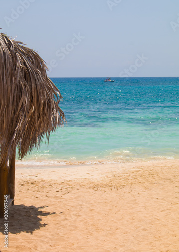 Foto op Canvas Cyprus Beach and palm trees, sunny day Cyprus