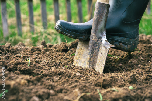Foto op Canvas Tuin Foot wearing a rubber boot digging an earth in the garden with an old spade close up